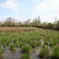 Marais de Reuves